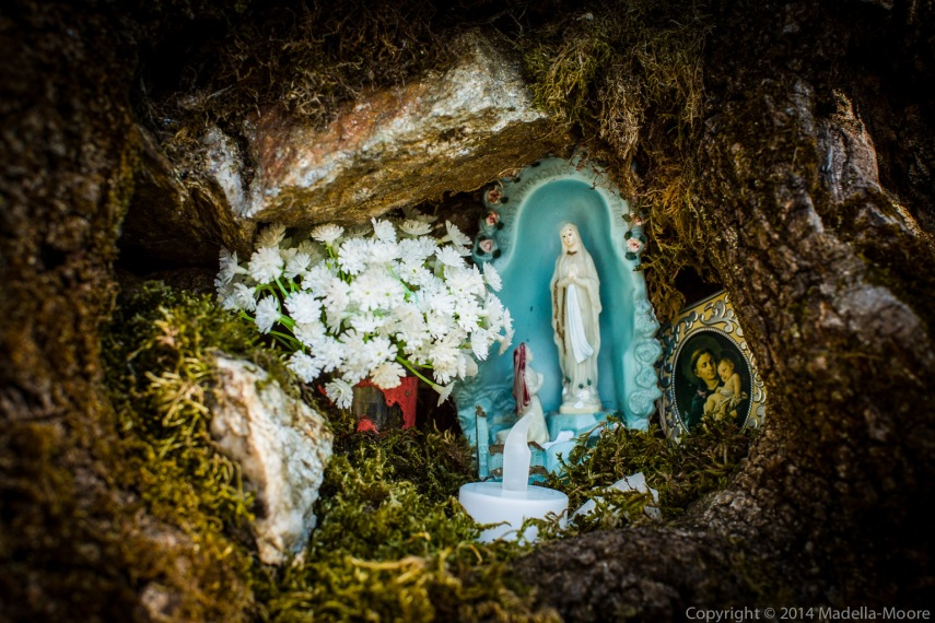 Shrine built in a hollow in a tree. 50mm @ f6.3.