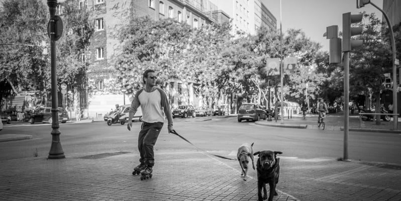 Dog walking on Rollerskates, Barcelona
