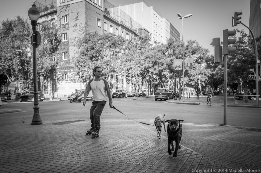 Dog walking on Rollerskates, Barcelona
