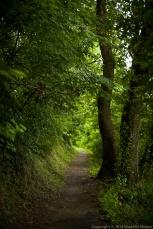 Woodland path, Sanico, Italy