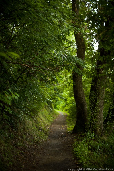 Woodland path, Sanico, Italy