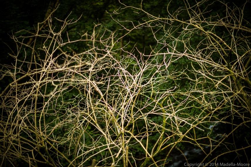wpid1761-italy-textures-03-9755.jpg