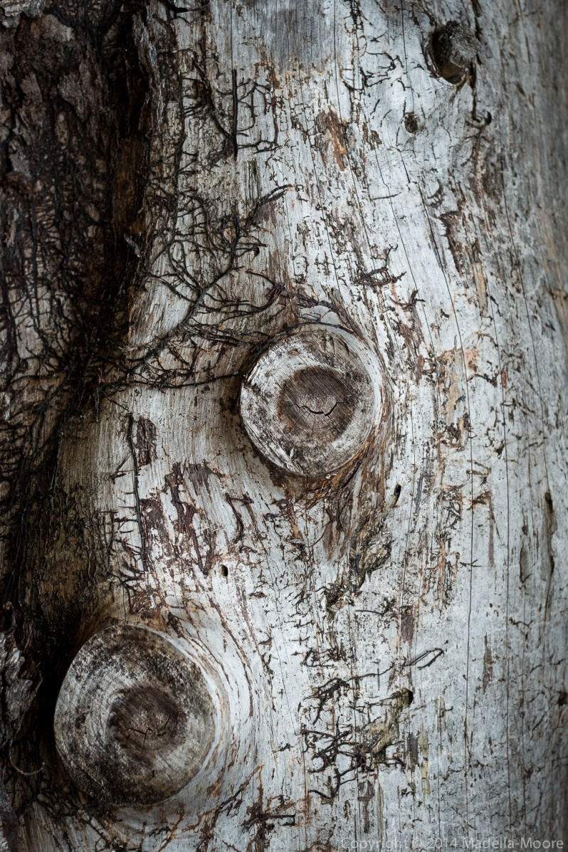 Old weathered log
