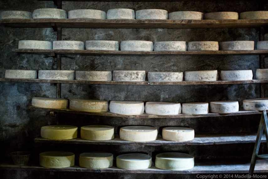 Racks of maturing cheeses, Pian delle Betulle, Italy