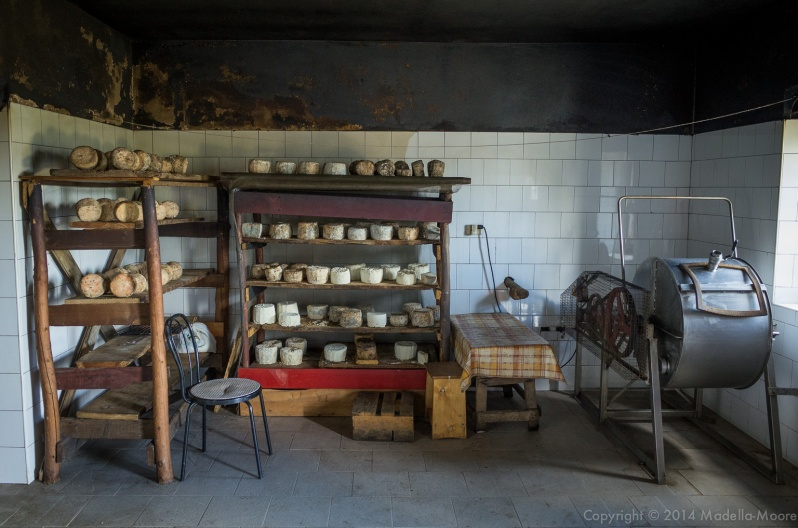 Milk churn and racks of maturing cheeses, Pian delle Betulle, Italy