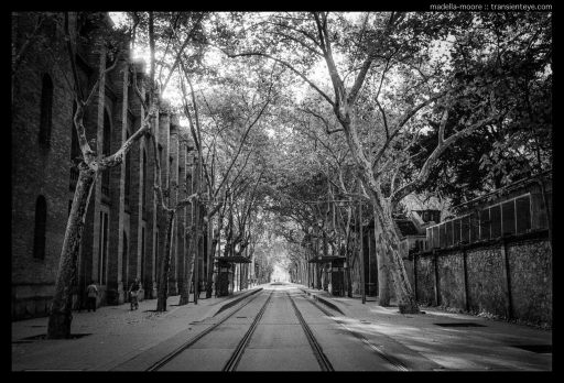 Vanishing Point: Tramlines and Trees, Barcelona. Leica M7 with Zeiss ZM 2/35 and Ilford HP5+