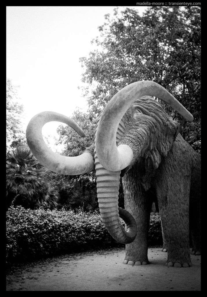 Mammoth, Parc de la Ciutadella, Barcelona. Leica M7. Zeiss ZM 2/35 Biogon.