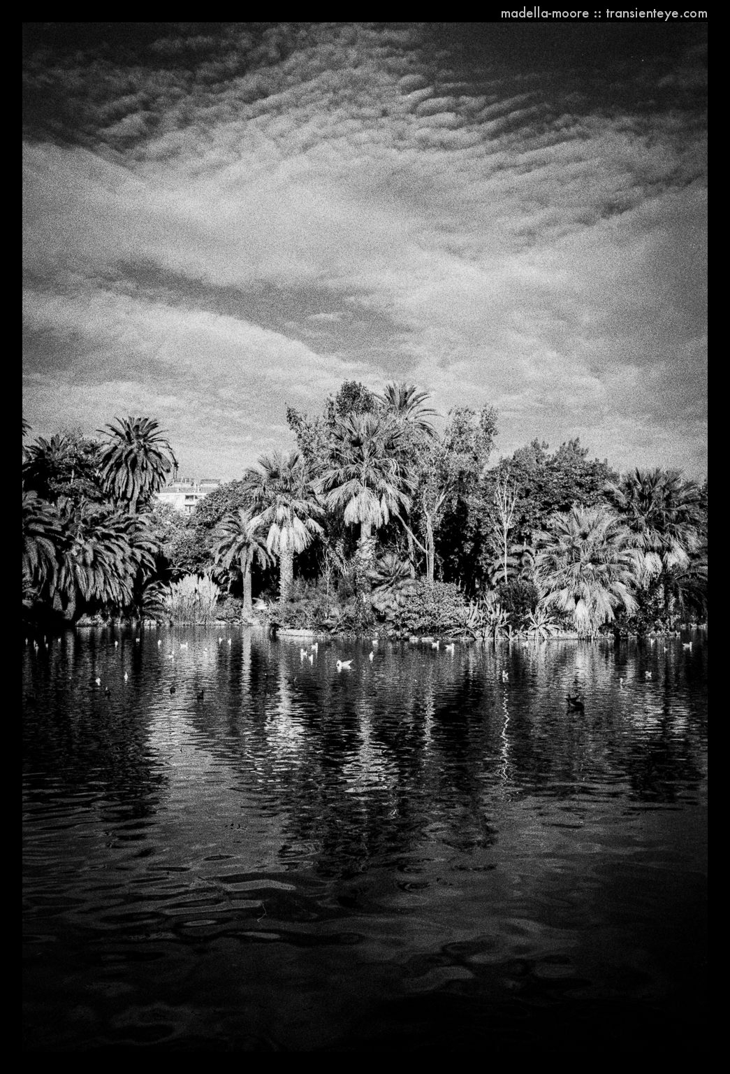 Parc de la Ciutadella, Barcelona. Leica M7,.