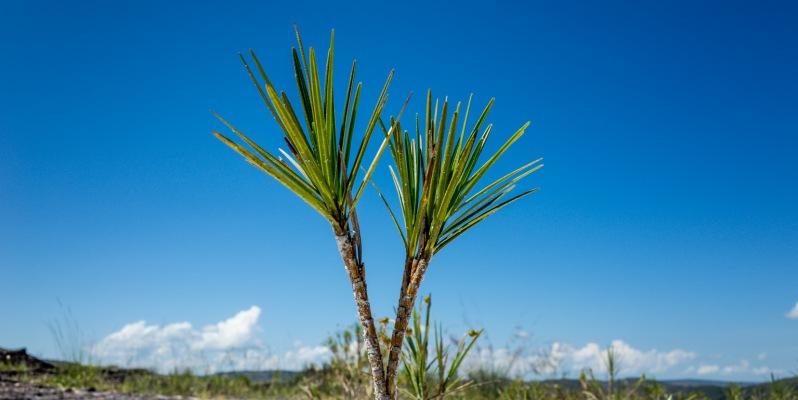 Plant Macro, Milho Verde, Minas Gerais