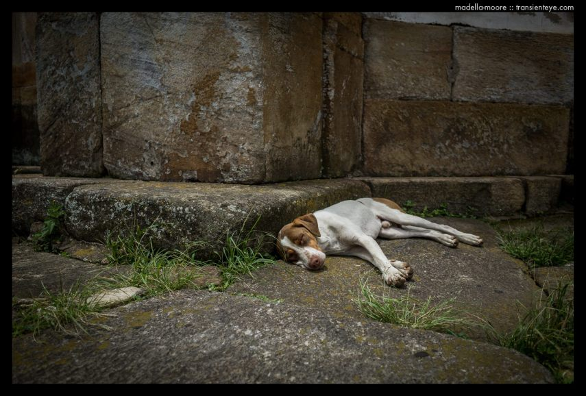 Sleepy dog, Ouro Preto, Brazil.