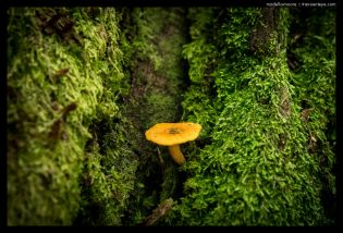 Plant life around Ouro Preto, Minas Gerais, Brazil