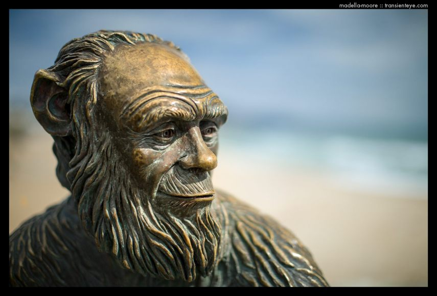Metal sculpture of Darwin as a monkey, Badalona