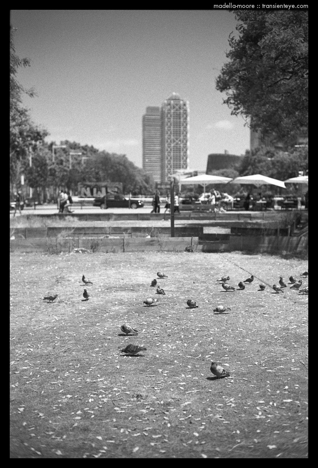 Barcelona Pigeons
