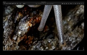 Capture One: final image at 400%.