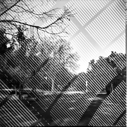 Black and white images taken with the Lomo Lubitel 166