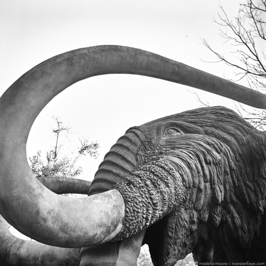The Barcelona Portrait Mammoth!