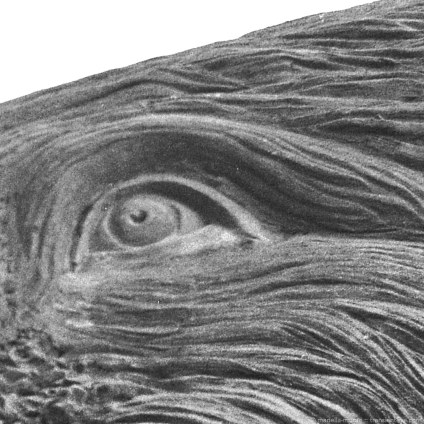 Crop of the Mammoth's eye.