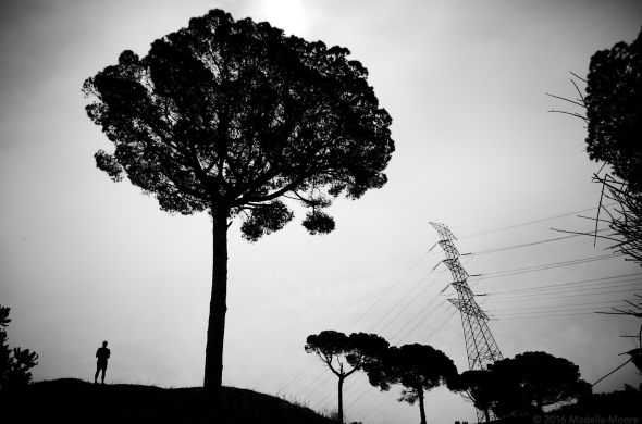 Pylons, trees and a humanoid.