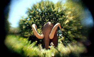 Mammoth!