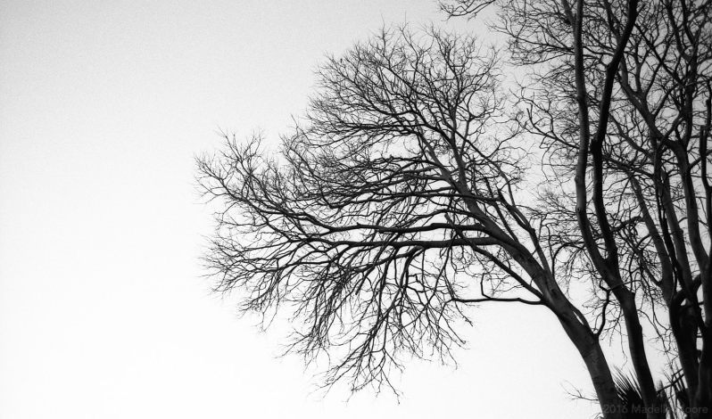 Tree Silhouette, Barcelona