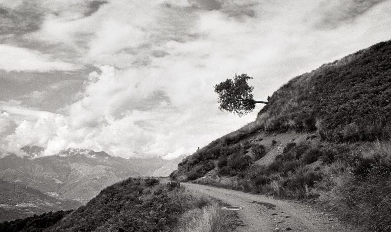 Falling tree on an alpine trail, Italy.