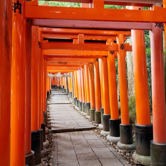 Fushimi Inari Taisha Temple, Kyoto