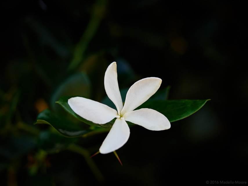 winter-garden-00960