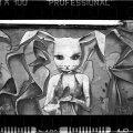 Rabbit, Barcelona (fullframe).