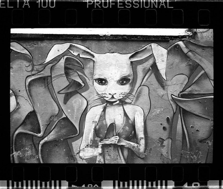 Rabbit, Barcelona (full frame).