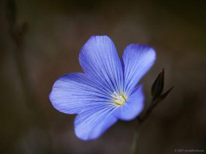 El Garraf - Flowers