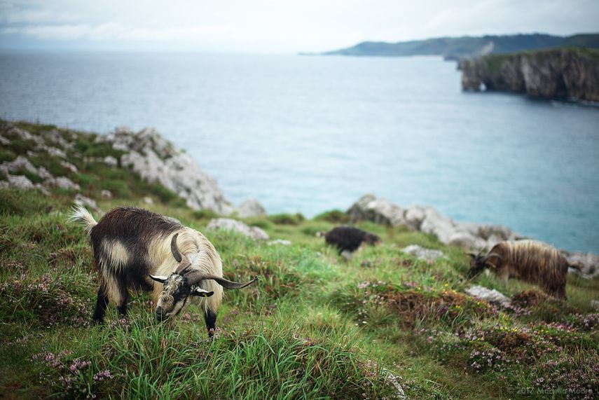 Every blog post should feature at least one goat. Leica M typ 262 with 50mm f1.4 Summilux and a very wet day.