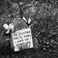 Civil War Grave.